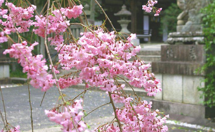 岡﨑神社の写真